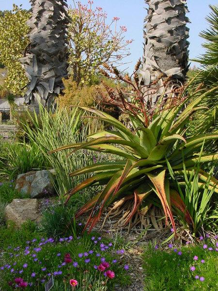 UCI Arboretum