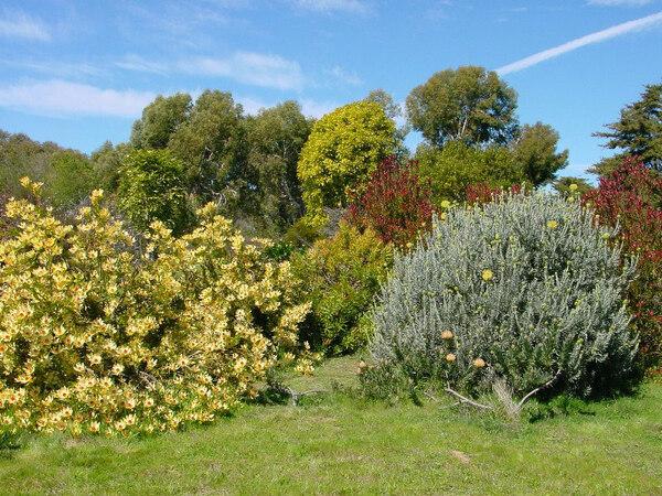 Santa Cruz Arboretum