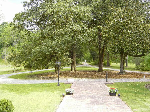 Magnolias, Linden Plantation