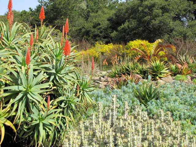 University of California Botanical Garden