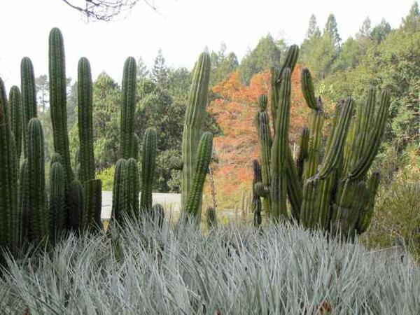 Cacti, UC Berkeley