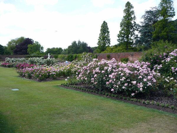Rose Garden, Hampton Court