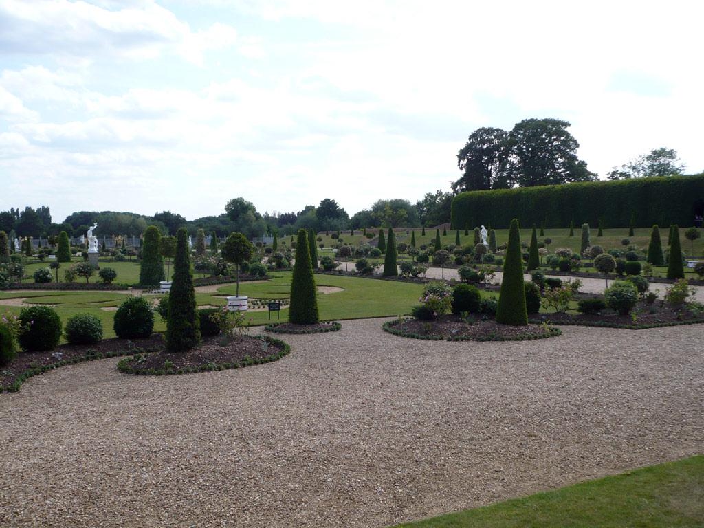 Roses In Garden: Hampton Court Palace Garden