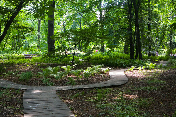 Aptekarsky Botanical Garden