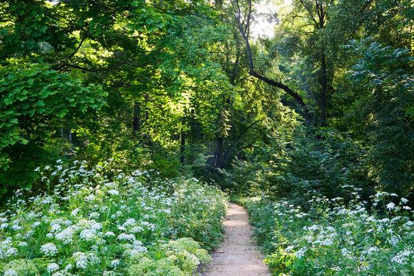 Path, Spasskoye-Lutovinovo