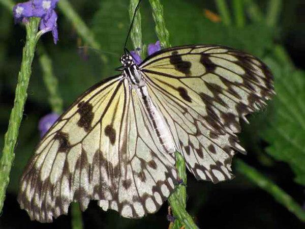 Butterfly, Niagara Botanical Garden
