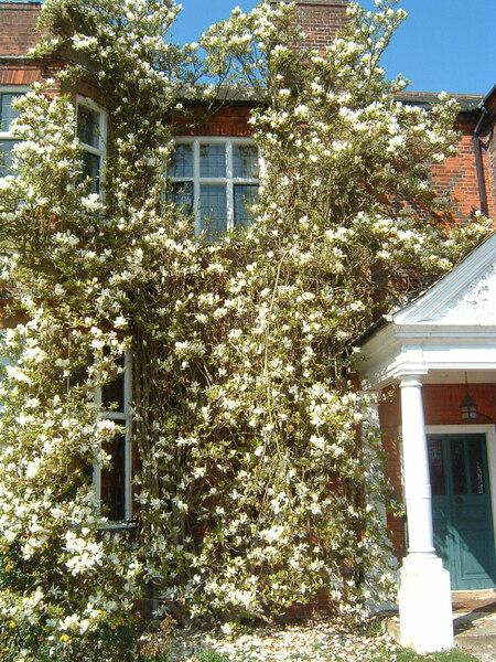 Magnolia, May
