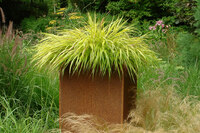 Medium knoll hakonechloa macra original