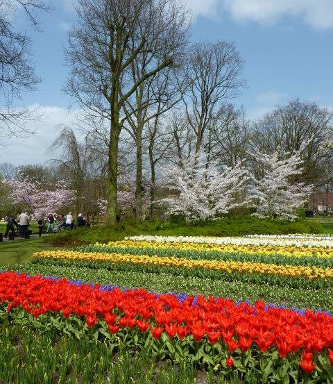 Keukenhof Tulips, Spring