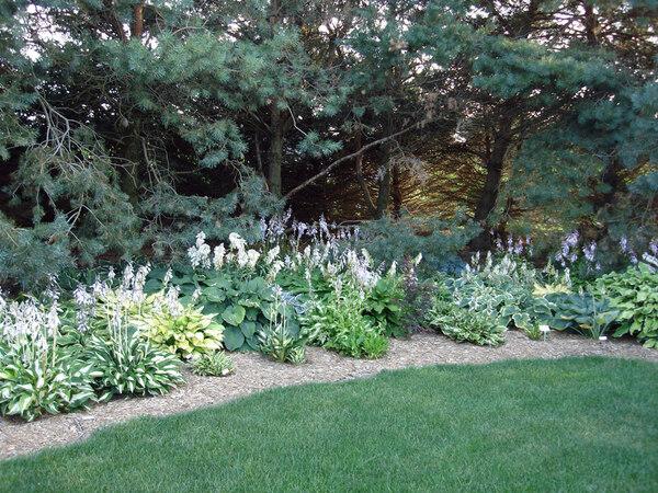 Hostas, Perennial Plant Peddler