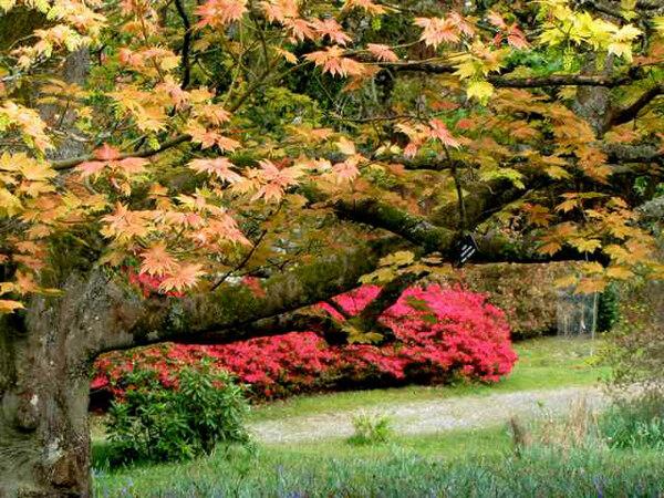 Leonardslee Gardens, Spring