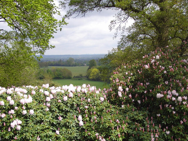 Rhododendron Walks, Bowood
