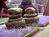 Medium topiary levens original