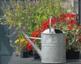 Medium watering can original