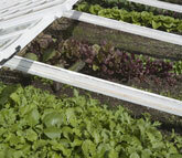 Medium cold frame propagation original