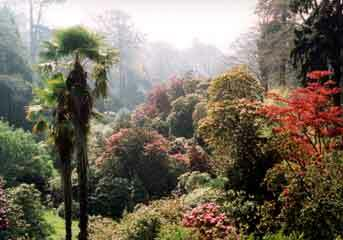 Trebah garden1