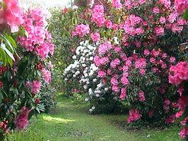 Muncastercastle garden