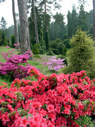 Bedgebury national pinetum
