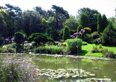 Pines garden lake