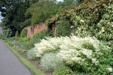 Delapre abbey garden