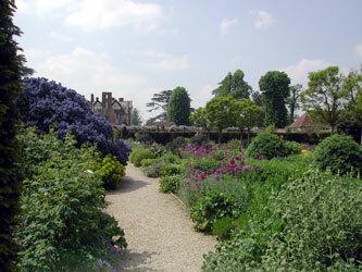 Loseley park cyanothus