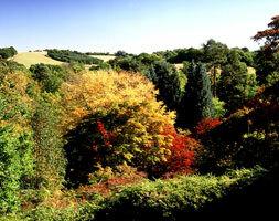 Winkworth arboretum ntpl