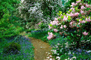 Arduaine garden nts