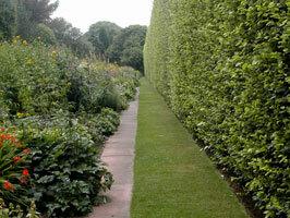 Edinburgh botanic gardens