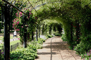 Hydeparkrosegarden