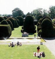 Heslingtonhall yews