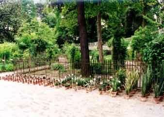 Padua botanical garden