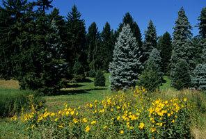 Arnoldarboretum