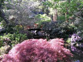 Descano japanese garden