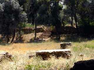 Plato academy garden