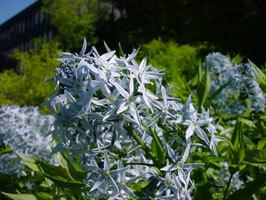 Zurichbotanicalgardens