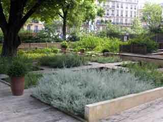 Medieval museum garden
