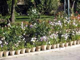 Sadi tomb garden1