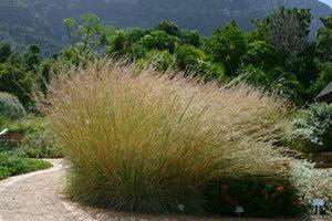 Kirstenboschbotanicgarden