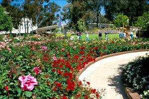 Balboapark rosegarden