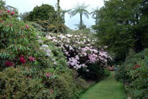 Pukeiti rhododendron trust