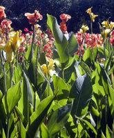 Melbournebotanicalgardens