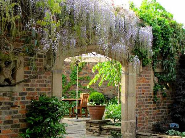 Wisteria, Kensington Roof Garden