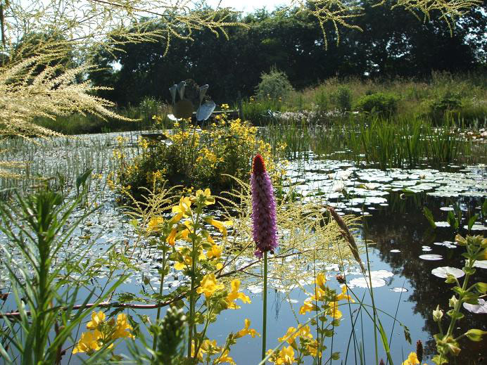 Lake, Moors Meadow Gardens