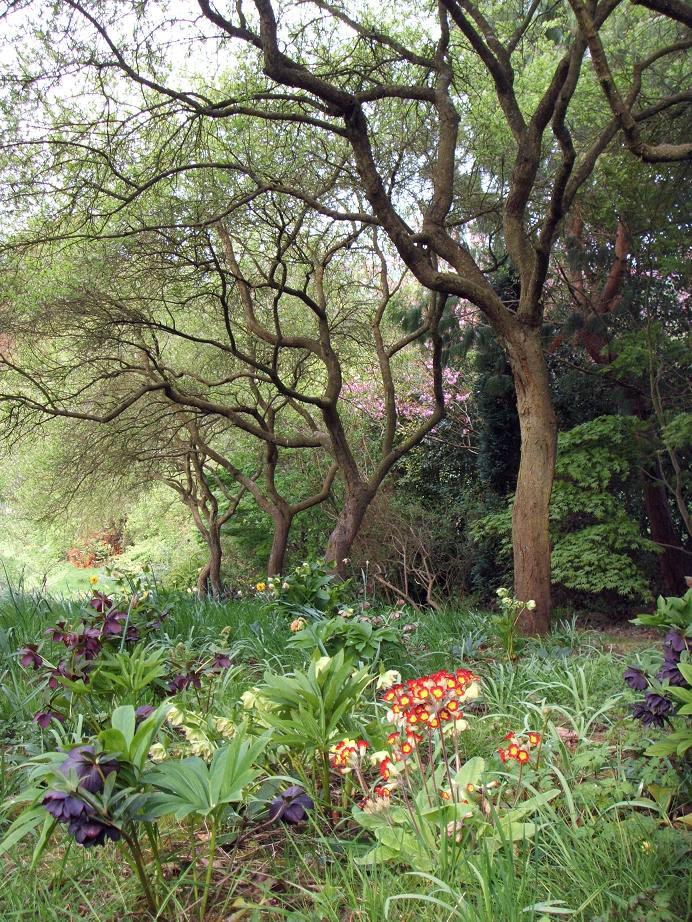Moors meadow gardens nursery moors meadow workwithnaturefo
