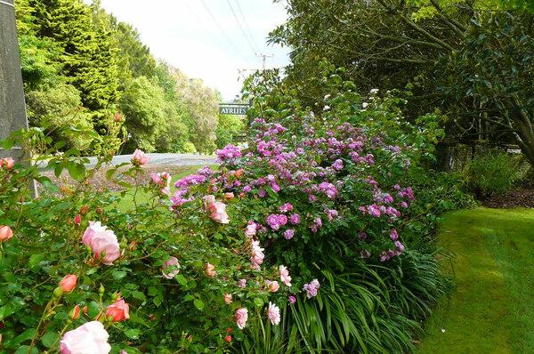 Roses, Ayrlies