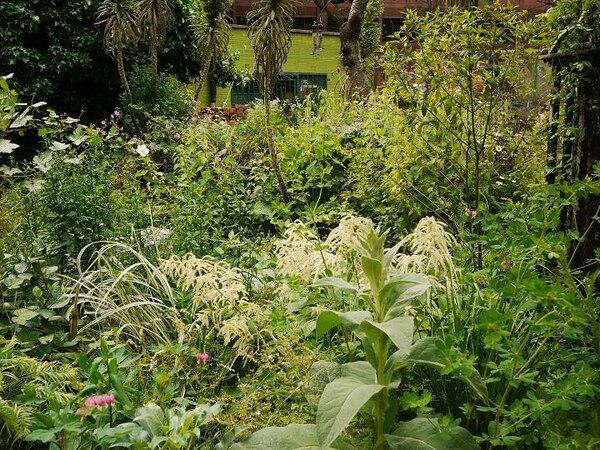 Phoenix Garden, Summer 2010
