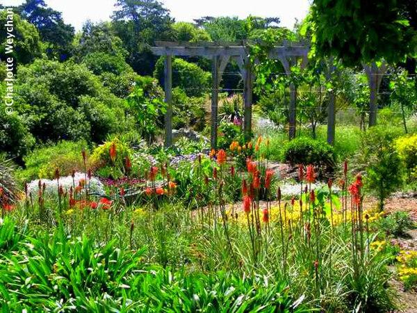 Ventnor Botanic Garden, Summer