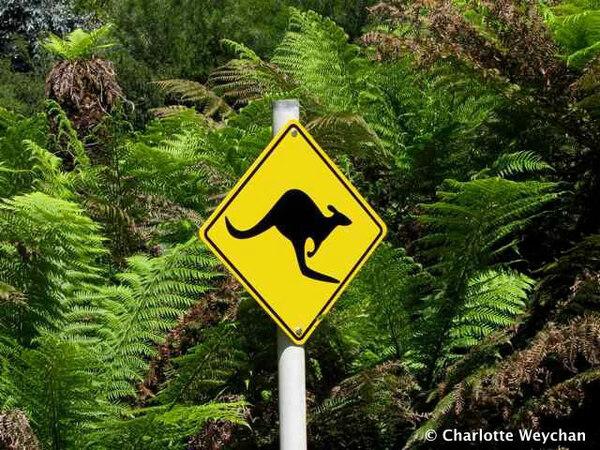 Australian Section, Ventnor