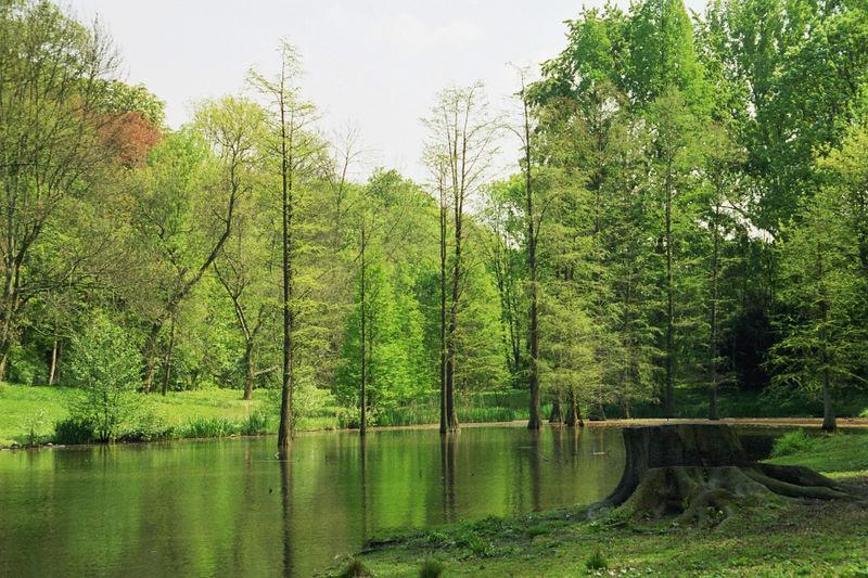 Rombergpark Parken