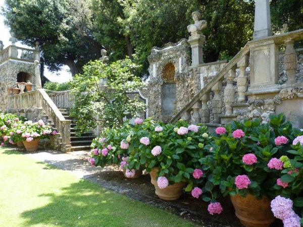 Hydrabgeas, Villa Gamberaia